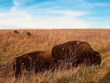 We took a buffalo drive.