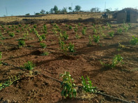 Agriculture on Drip Irrigation