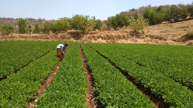 Group Farming