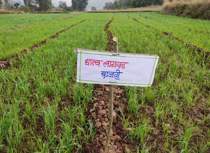 Second cropping in Adgaon