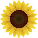 flowers-1169667_1280.png