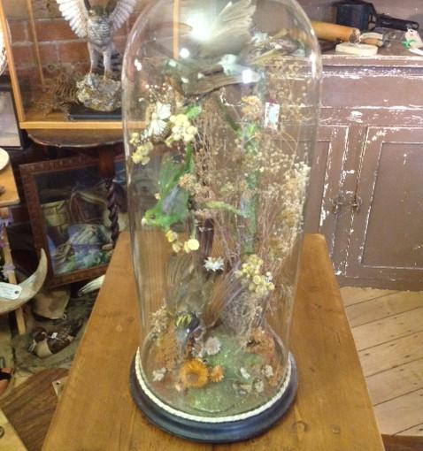 Taxidermy birds in glass dome