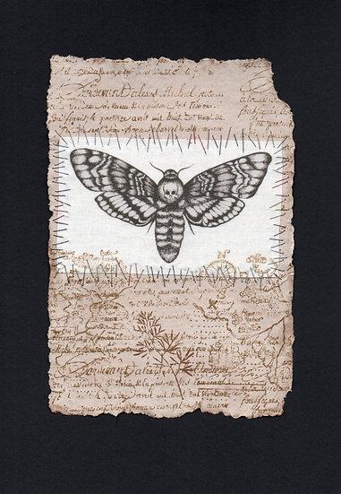 Explorers Notebook Page - Death's Head Hawk Moth