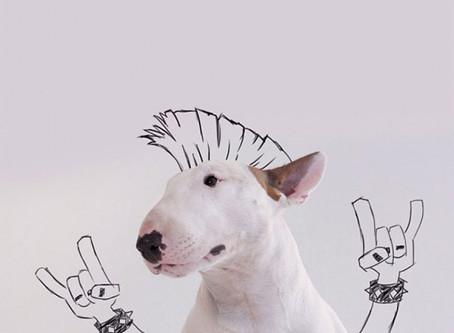 Rafael Mantesso: un hombre, un perro y mil historias por contar