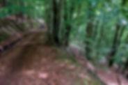 Tracks Basajun