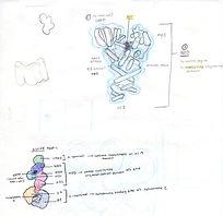 apaf-1 notes