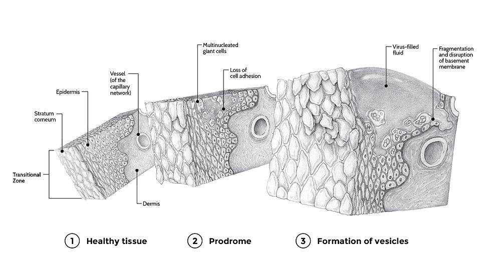 tissue cube study