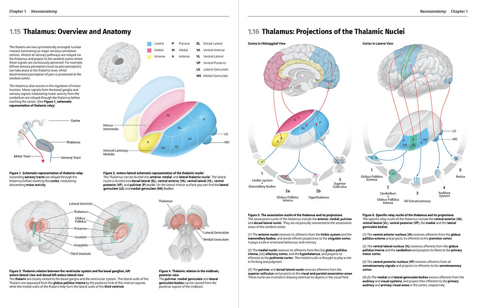 Overview and anatomy of th thalamus