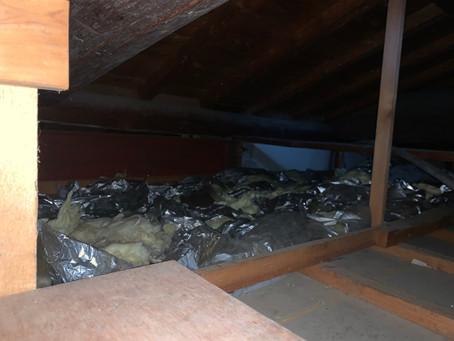 屋根裏のハクビシン