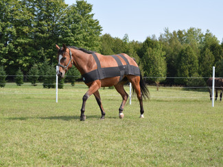 You Can Build A Better Horse...With ProSix!