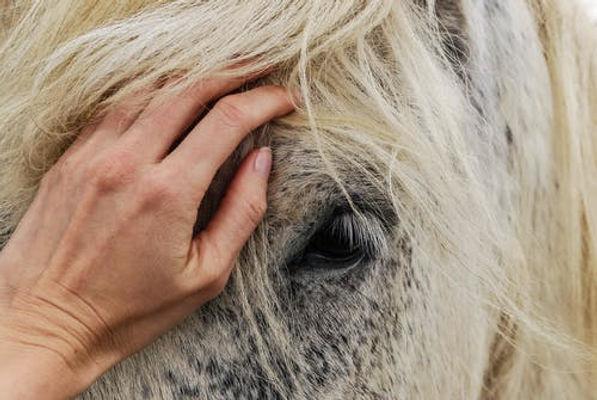hand on horse.jpeg