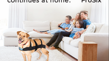 Help clients with at-home therapy for canines