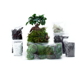 kit terrarium humide grand ficus atelier green factory. Black Bedroom Furniture Sets. Home Design Ideas