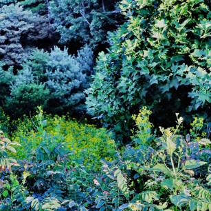Summer foliage