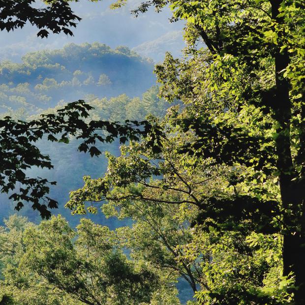 Ninebark View