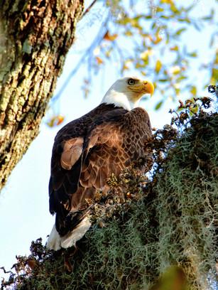 Eagle eying San Marco