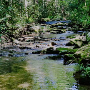 Dugger Creek in BRMC