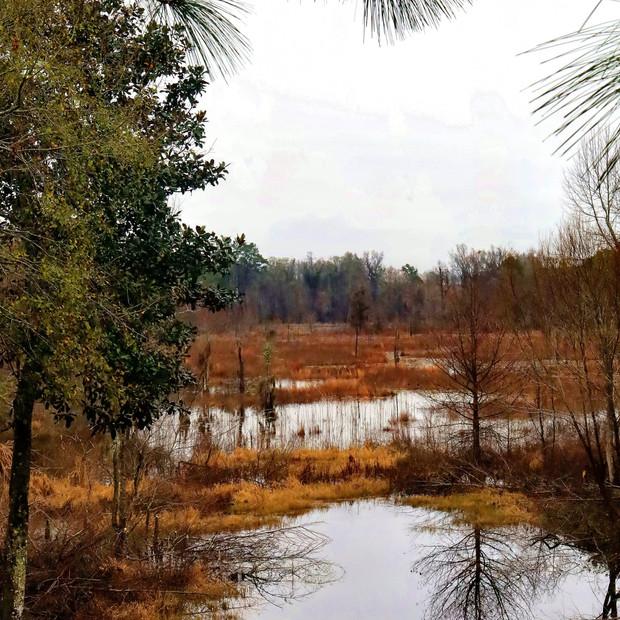 Cypress lake in winter