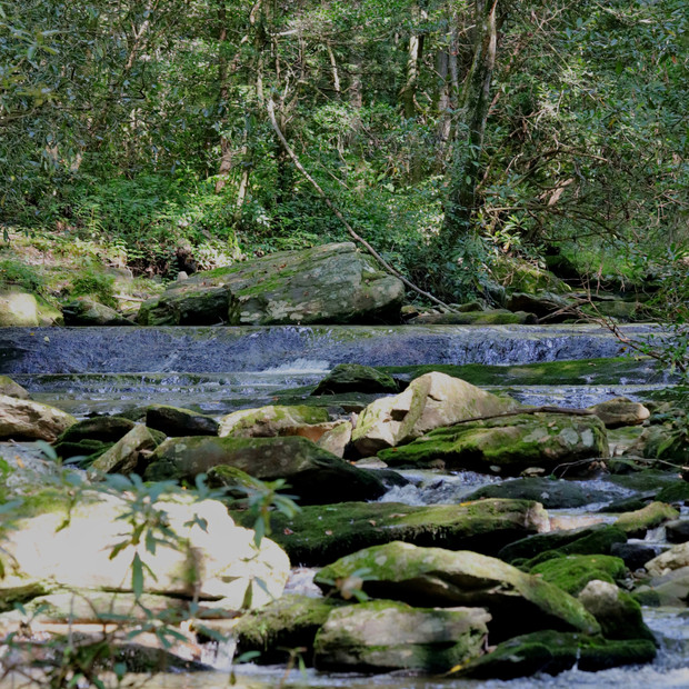 Dugger Creek 1