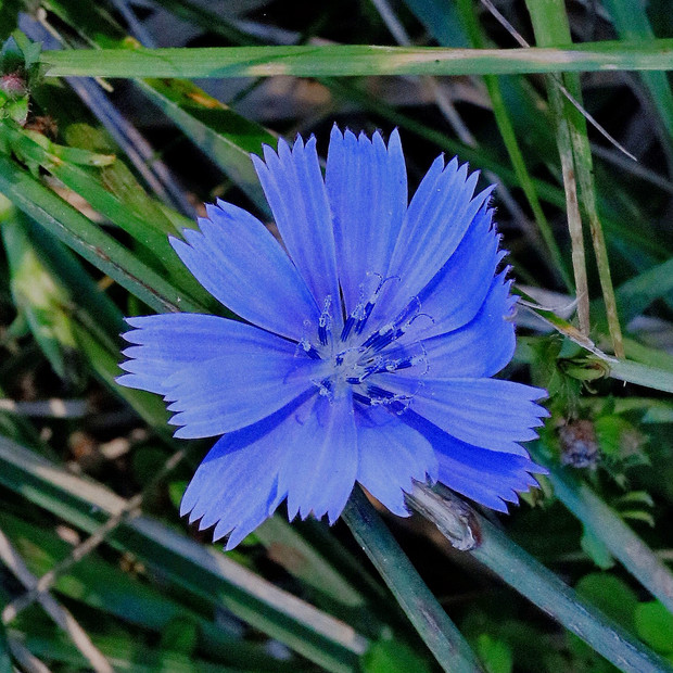 Parkway wildflower