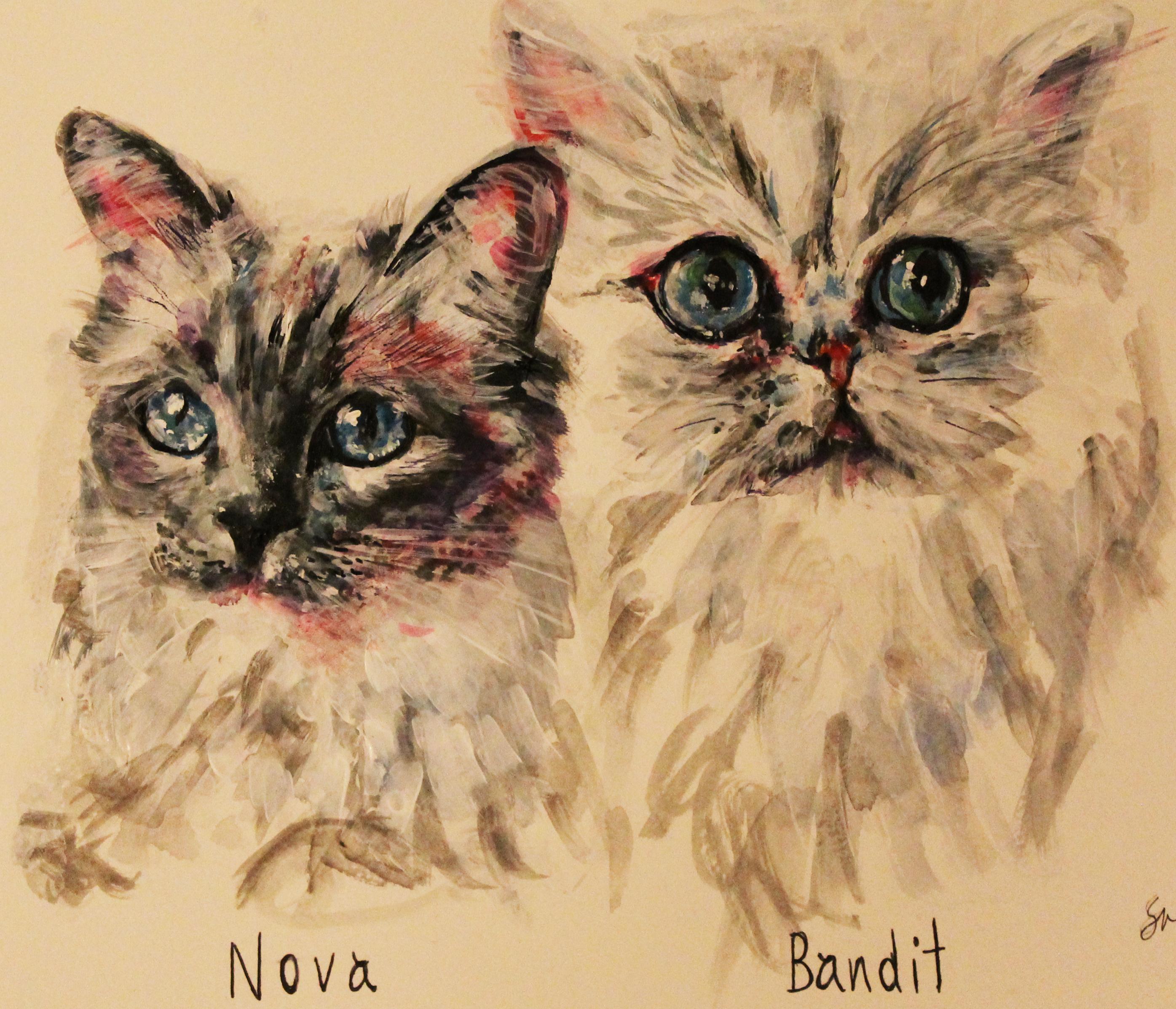 Nova & Bandit