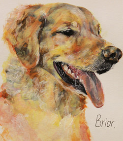Brior