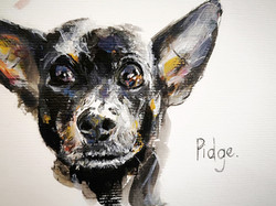 Pidge