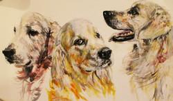 Hector, Alfie & Sydney