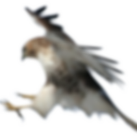Sparrowhawk01_zps8b049b88.png~c200.png