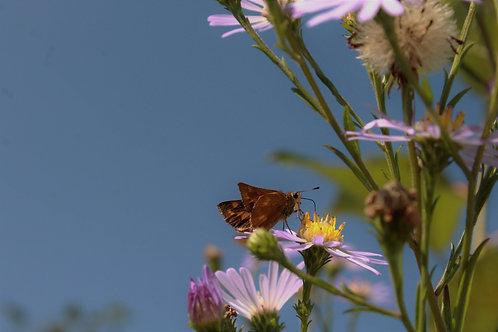 Oh Little Butterfly