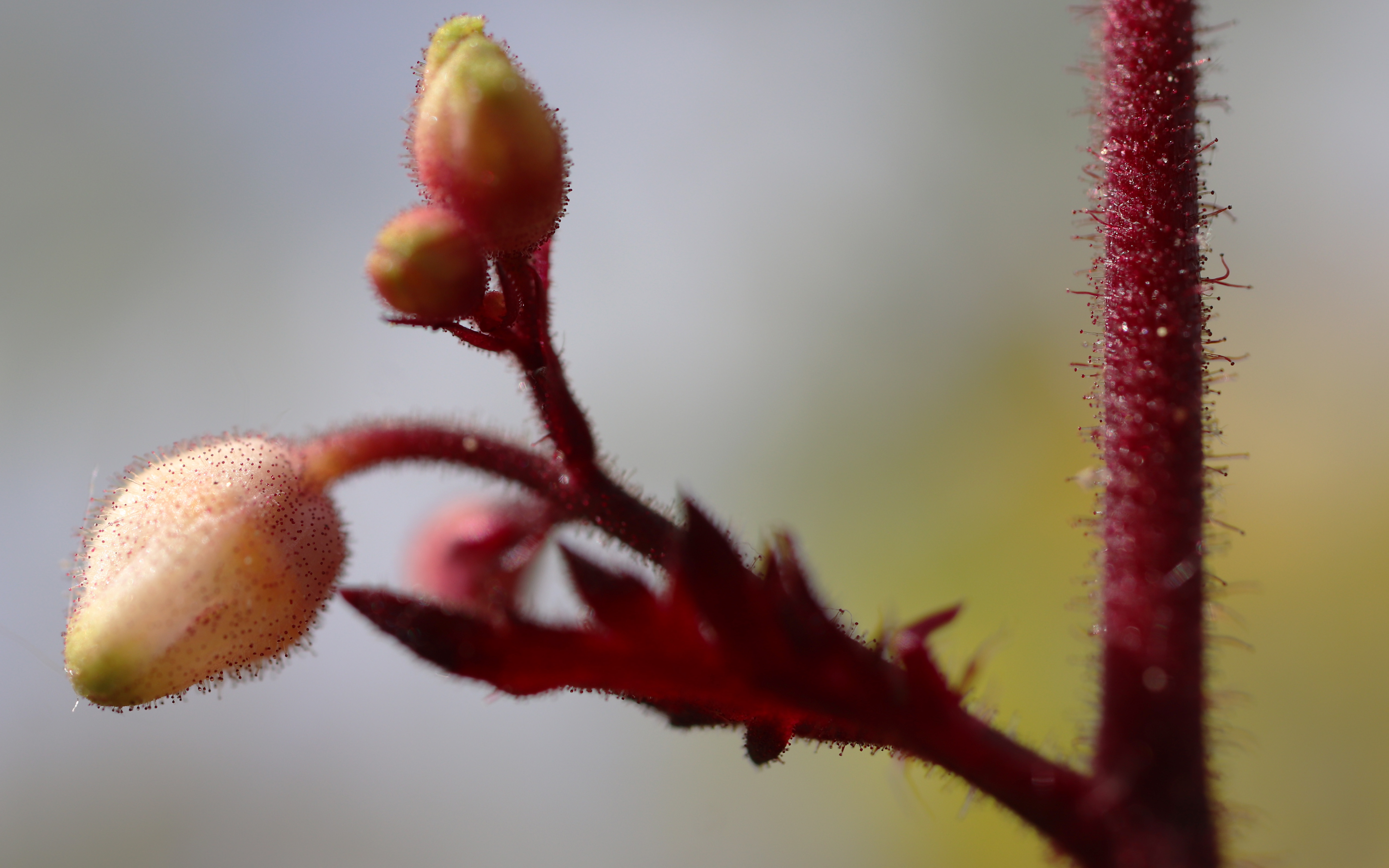 closeup Plant