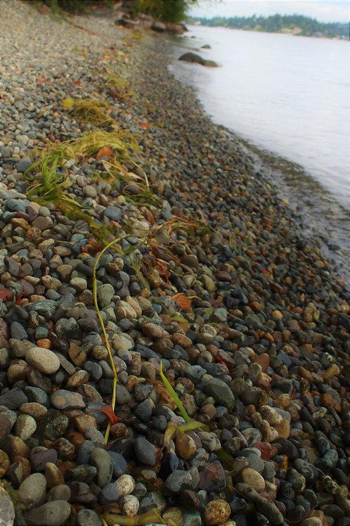 Washington Beach