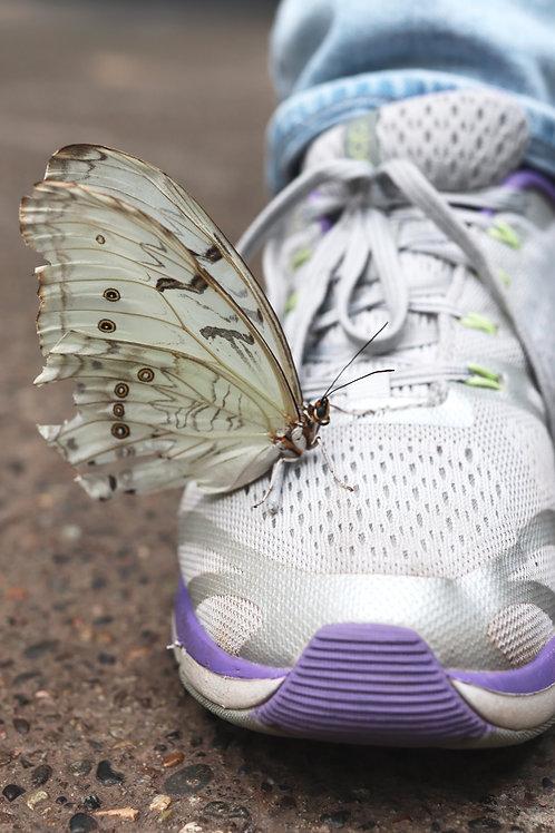 Shoe Butterfly