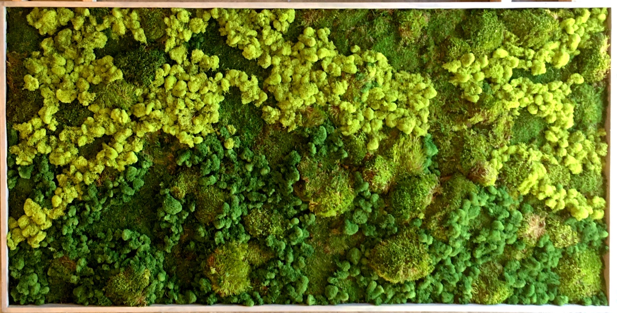 Detail Moss Installation