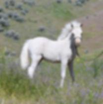 Hyde Away Ranch SJ Miss Spitfire