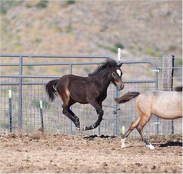 Hyde Away Ranch Unique Gallant Lad