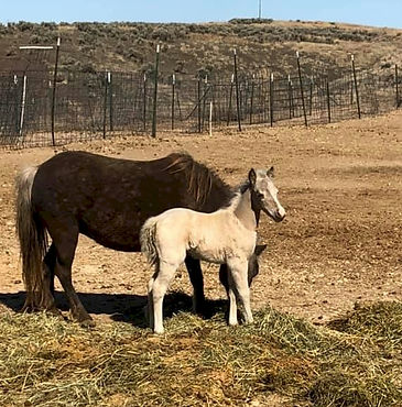 Breey's 2021 Filly_10 days old_RS