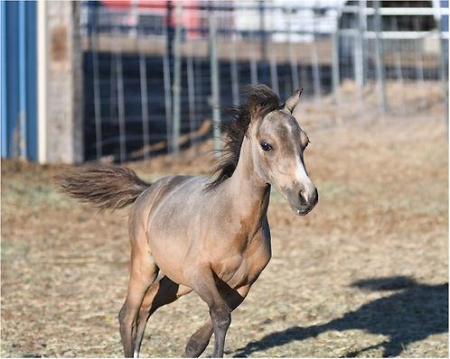 Hyde Away Ranch Unique Sheza Diva