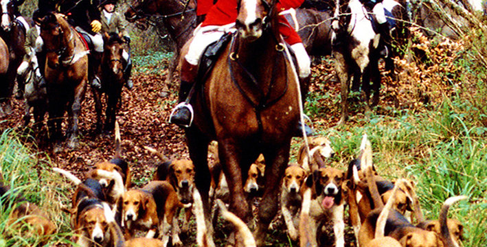 The County Limerick Foxhounds - Buy any 3 DVDs for the price of 2 - click 4 more