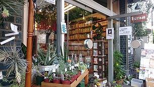 緑の本棚2.jpg