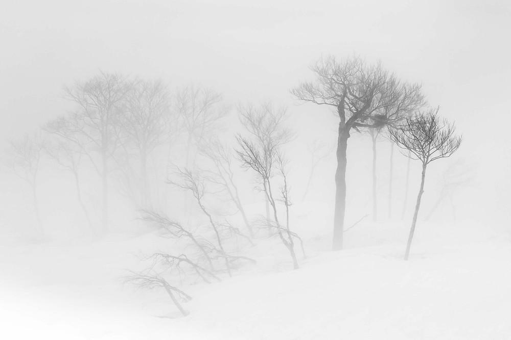 myrsky aapeli talvimyrsky