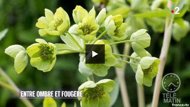 Joli reportage sur notre jardin pour les journées des plantes de Chantilly