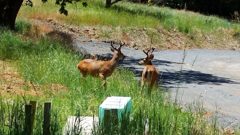 deer_edited