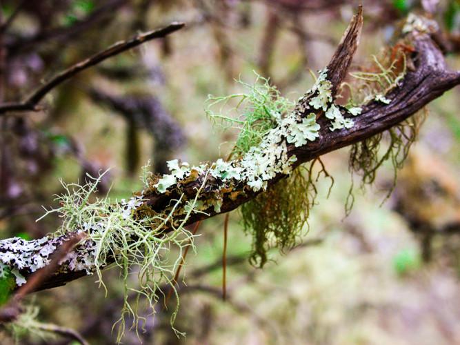 Mossy Branch