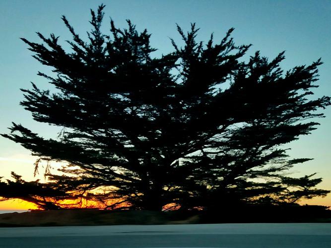 Cypress at Sunset