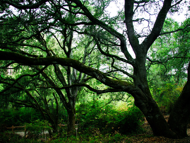 Hazelnut Trail