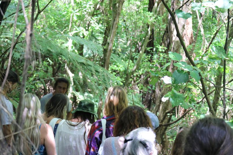Rongoa bush medicine tours at Tanglewood
