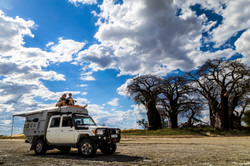 Baines Baobabs Botswana DTours 2018