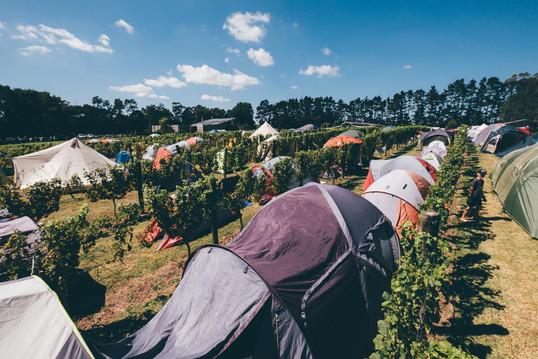 Camping in the vines by Marcin Reweda.jp