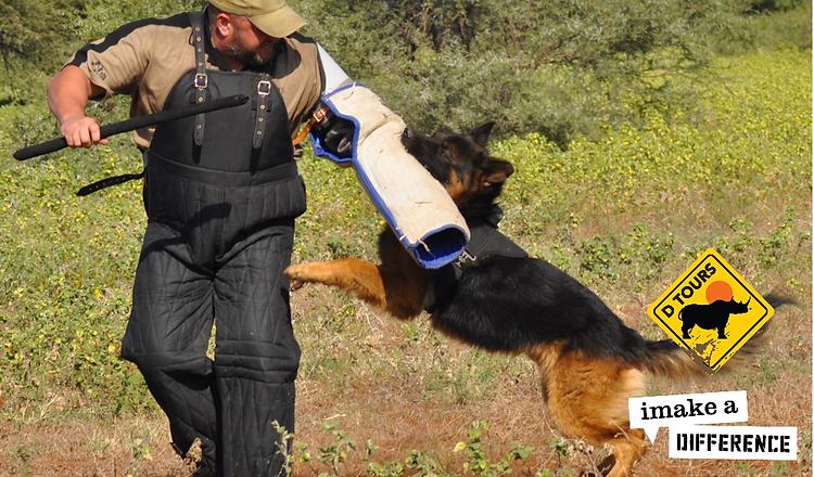 Tracker Dog Training